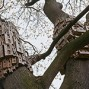 Holz-Ist-Genial-Spontaneous-City-titel